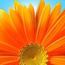 Standardbild: Blume